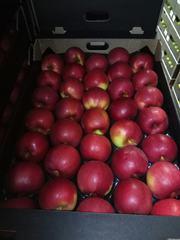 Яблоки из Польши разных сортов