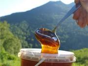 Продаем горный мед оптом в пригороде Алматы (Иссыке),  тел.+77786016143