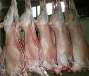 Говядина,  баранина,  мясо птицы,  куриная разделка оптом от 1, 5 тонны