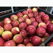 Продам фрукты из Китая оптом