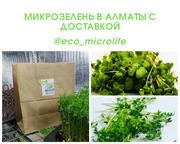 Микрозелень Алматы доставкой